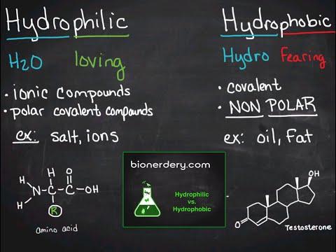 Hydrophilic vs. Hydrophobic