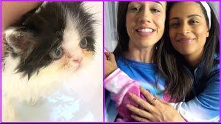 Kitten bath and LILLEEN!