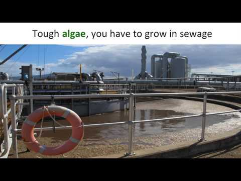Who gives a s**t about sewage anymore? | Nicholas Paul | TEDxJCUCairns