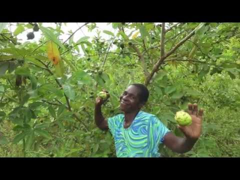 Fruitful Office Planting Fruit Trees in Africa - Tree Clubs