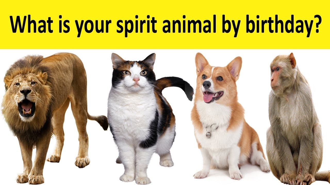 What Is Your Spirit Animal By Birthday Youtube