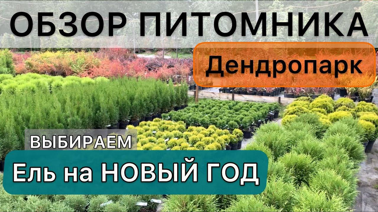 Хвойные и Лиственные для маленького сада Виды и Сорта #ель #туя #береза