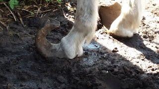 Interwencja w sprawie potwornie zaniedbanych 22 koni! Bez Was …
