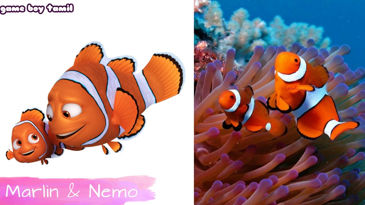 Download Finding Dory Characters In Real Life