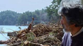 森と海の絆-東北復興へのビジョン