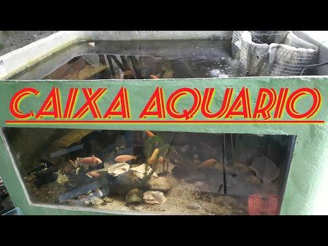 Ciclideos africano em caixa aquário,Só peixes top ...