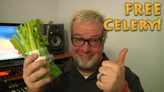 FREE Celery - an EASY at home solution for fresh produce