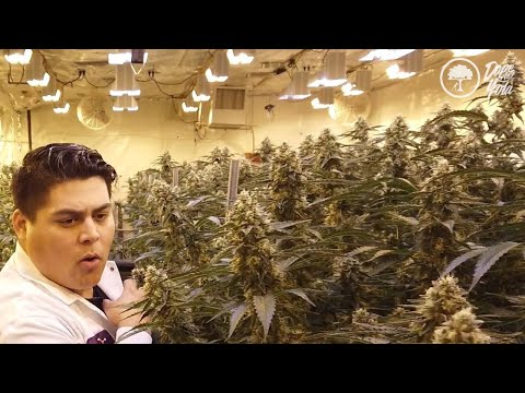 24 Hrs in LA Weed : THE DOPEST VLOG