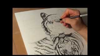 Fast drawing - Bengal tiger  in ball point pen, markers and a bit of soft pastels.wmv