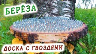 Берёза Садху ॐ Доска с гвоздями для йоги ☼ Мастерская РА