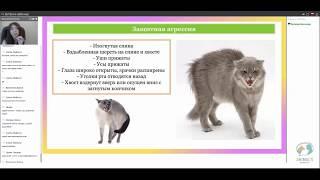 Оборонительная и наступательная агрессия у кошек. Язык кошек.