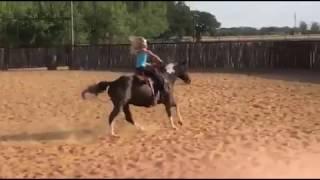 Simba - lope left - big WHOA - Color Me Smart cutter - turnback horse
