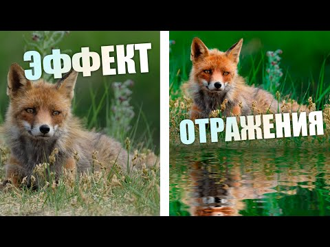 Делаю эффект отражения в воде / Adobe Photoshop CC 2020