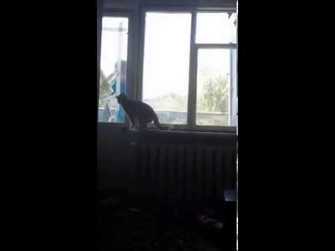Кот напал на хозяина