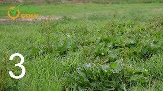 Grass into Gold odc. 3 - Jak poprawnie dokonać renowacji łąki lub pastwiska.