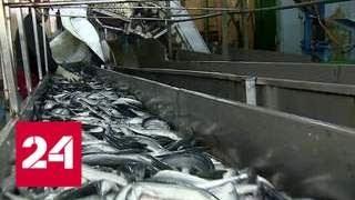 Россия будет перерабатывать у себя больше рыбы - Россия 24