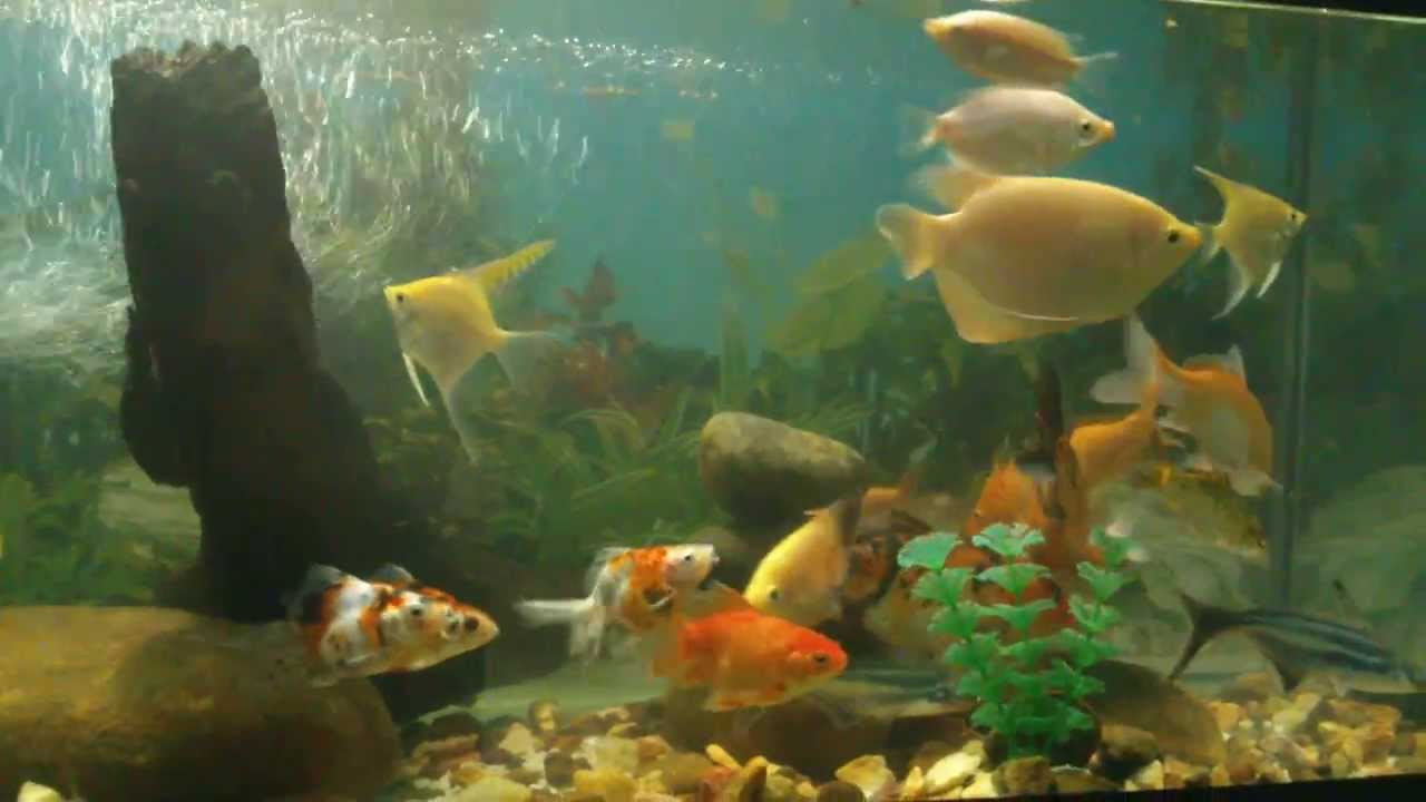 Fish aquarium in sri lanka - Fish Tanks Sri Lanka Waruna Udara Sampath Mathugama