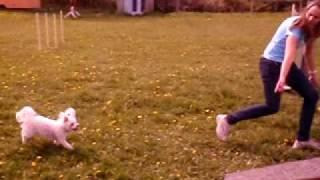 Nelly tränar agility 3