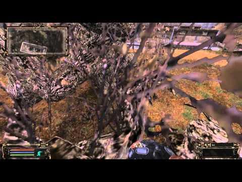 дереве на Радаре