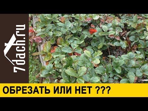 Вопрос: Стоит ли обрезать листья земляники осенью?