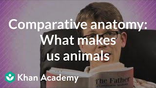Comparative anatomy: What makes us animals | Crash Course biology | Khan Academy