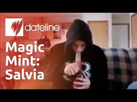 Salvia the magic mint: medicine or menace?