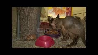 Приют для кошек и собак «Добрые руки» начал принимать животных