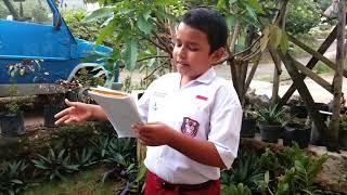 Puisi Asrul Sani Surat Dari Ibu