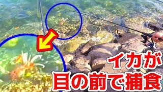 イカが大爆釣!目の前でエギが食べられる!!