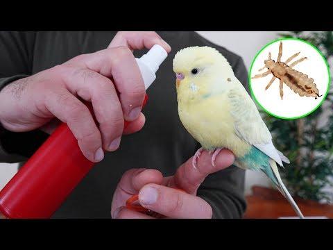 Yaz Geldi ! Bitlere Dikkat - Muhabbet Kuşu Papağan Bit Spreyi