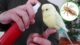 Yaz <b>Geldi</b> ! Bitlere Dikkat - Muhabbet Kuşu Papağan Bit Spreyi ...