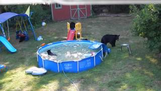 A bear family takes a dip in our pool - Part II thumbnail