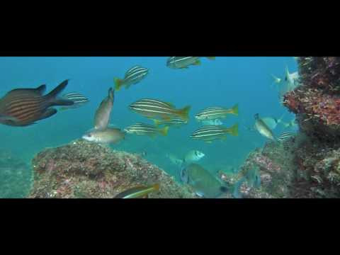 Promotional Vídeo - Algarve Nature Week Show 2017