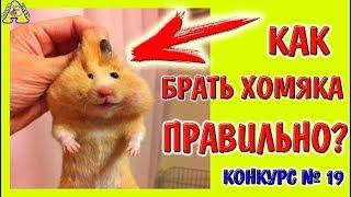 кАК БРАТЬ ХОМЯКА ПРАВИЛЬНО? / ВЗЯТЬ ХОМЯКА НА РУКИ /ДРЕССИРОВКА ХОМКИ / hamsater / Alisa Easy Pets