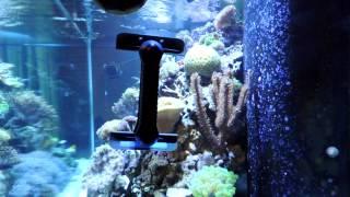 Best Aquarium Cleaning Magnet the Tunze Care Magnet
