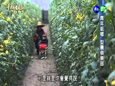 橙蜜香小番茄 青年返鄉 組成型農俱樂部 打造農業新世代