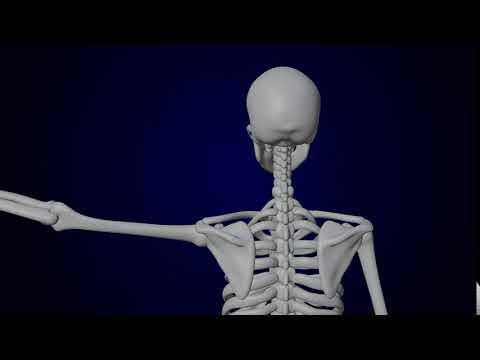 【医療向け】人体模型の3DCGアニメーション(一部)