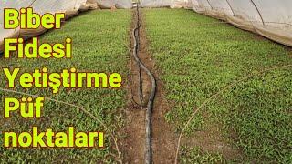 96 Biber fidesi yetiştirme püf noktaları, biber yetiştiriciliği mersin Tarsus baharlı köyü