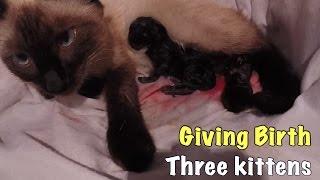 VLOG: КОШКА РОЖАЕТ/GIVE BIRTH TO A BLACK KITTEN/ЖЕСТЬ/PART 1