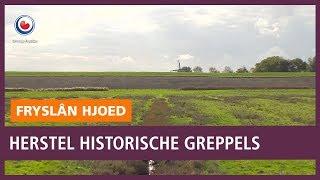 REPO: Herstel historische greppels bij Peasens helpt weidevogelkuikens
