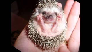 10 самых милых животных мира !