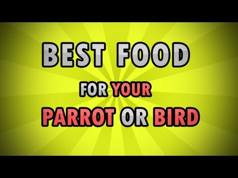 Best Healthy Food Diet for Birds/Parrots