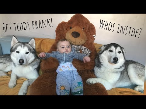 GIANT TEDDY BEAR PRANK on Our Huskies and Children!