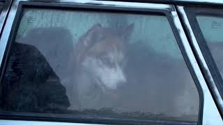 Питомник, где умирают собаки, посетили полицейские