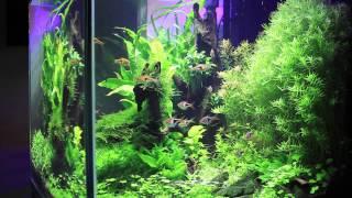 full led diy aquasky planted tank