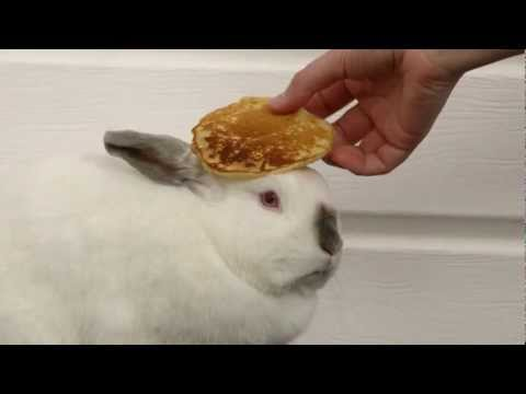 Waffles The Bunny With A Pancake On Her Head