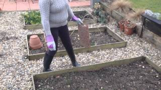Gardening Jobs - Companion Planting in March