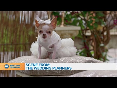 The new series 'The Wedding Planners' premieres tonight on Citytv!