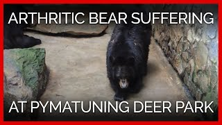 Bear at Pymatuning Deer Park Suffering From Crippling Arthritis