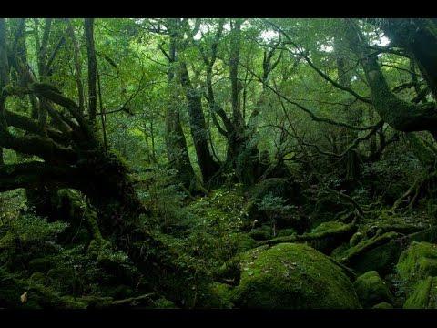 自然環境音 野鳥のさえずり + 528Hz   睡眠用・勉強用・病気治療・癒し・作業用BGM 記憶力UP   Nature Sound  Bird Song